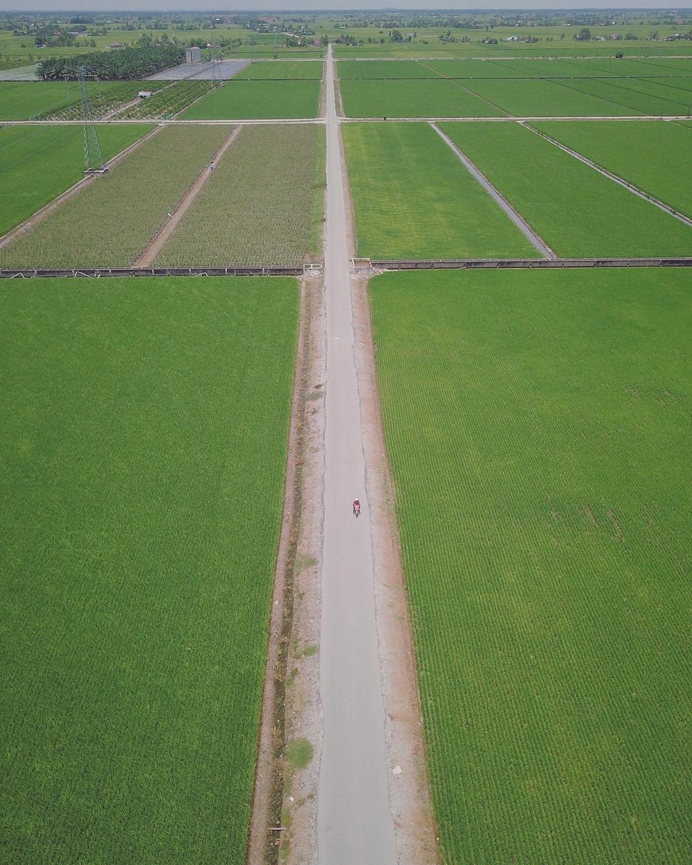 适耕庄稻田