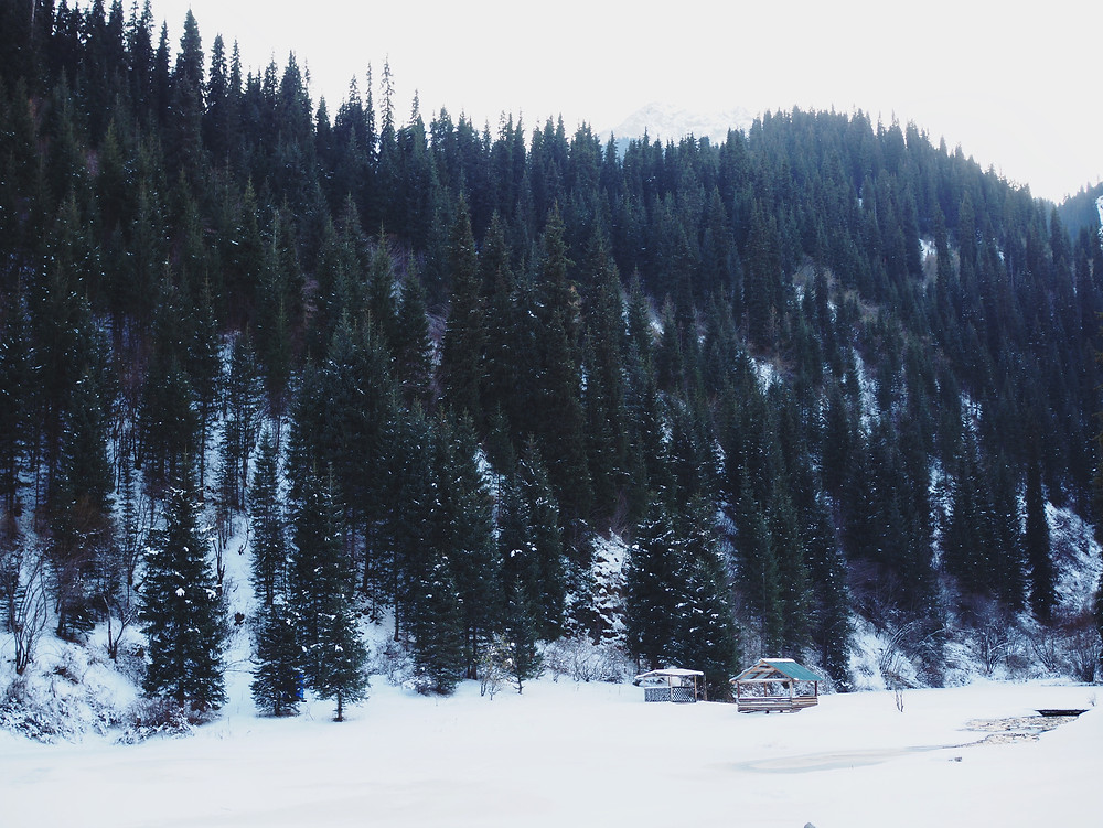厚厚的雪地和沾上雪花的云杉林。