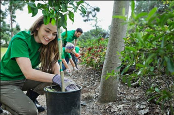 corporate social responsibility, plant trees