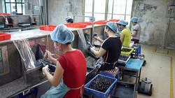 Vietnam toy manufacturing - Paint