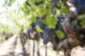 grapes-1952073__340.jpg