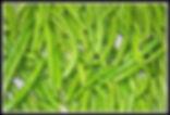 Fresh Green Beans Side Dish