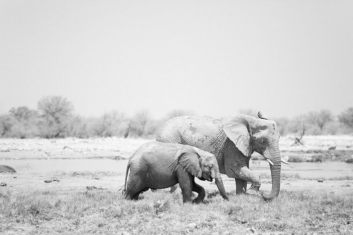 Mother and baby elephant walking at Etosha Nationa Park in Namibia South Africa