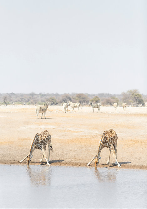Watering Hole. Namibia, South Africa.