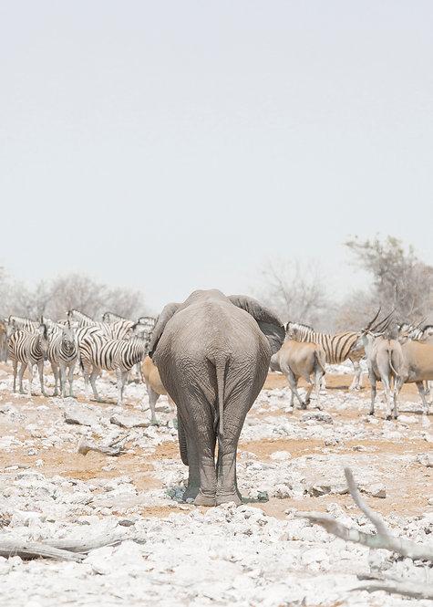 Elephant's Bottom. Namibia, South Africa.