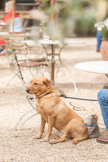 Golden retriever dog at Soho Farmhouse