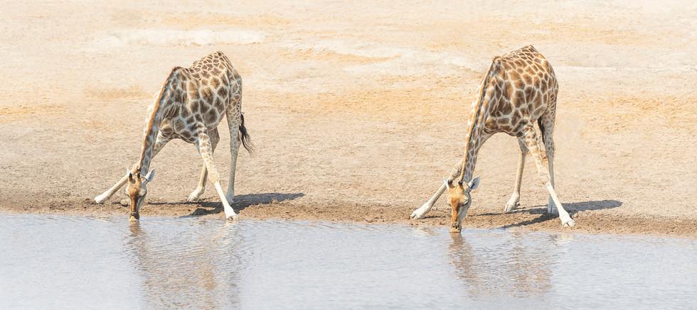 A2_WateringHole_Namibia_PrintShop_ChloeW
