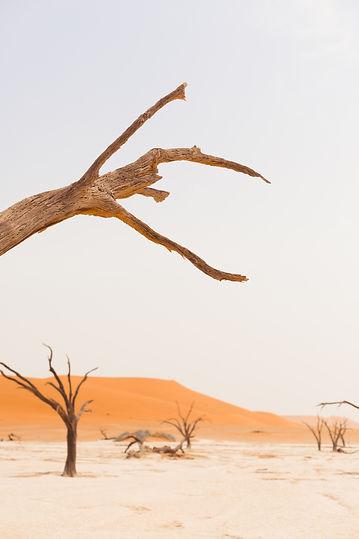 Website_Journal_Namibia_ChloeWinstanley_
