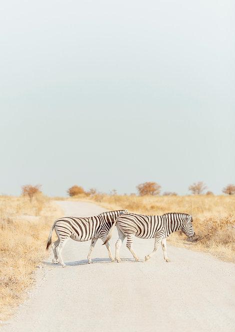 Zebra Crossing. Namibia, South Africa.