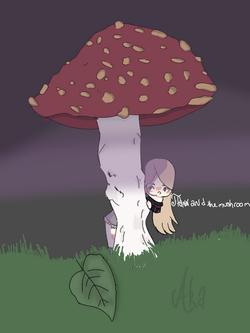 Flanny champignon