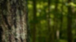 tree_trunk-Forest_plants_wallpaper_1366x