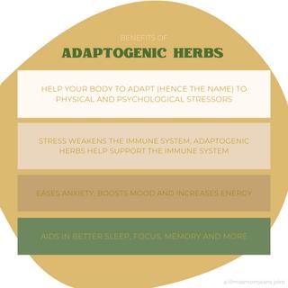 Adaptogens Infographic