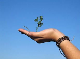 Hand Holding a Plant