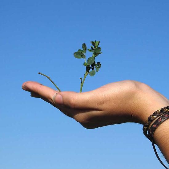 Mão que prende uma planta
