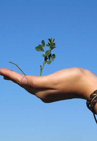 Mano que sostiene una planta