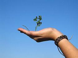 main avec herbe qui pousse, grandir, développement
