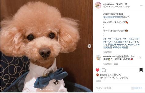 miyukiham3.jpg