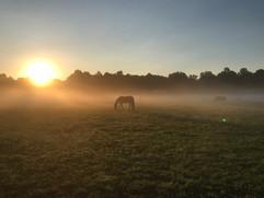 A foggy sunrise
