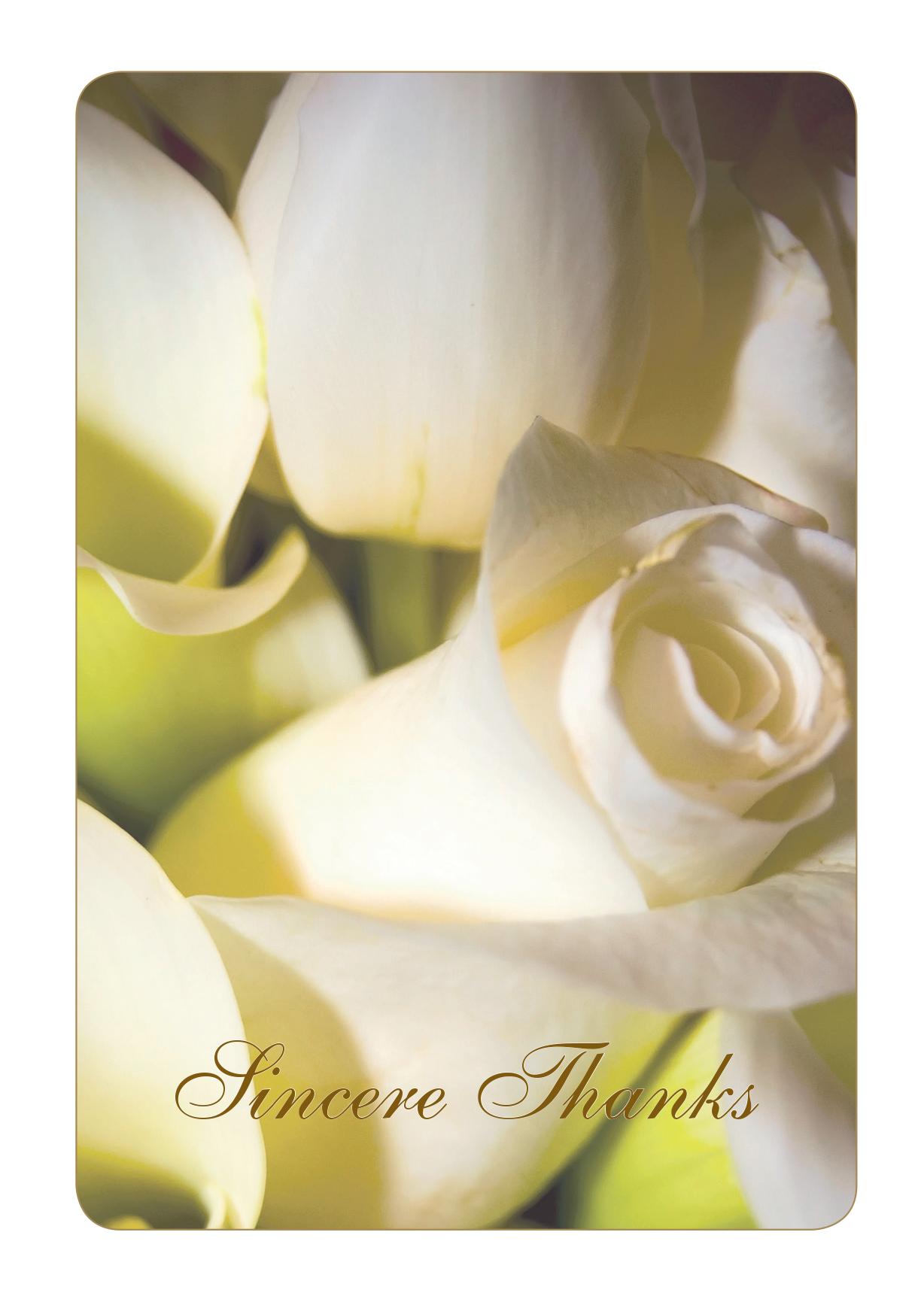 RT03 - White Roses