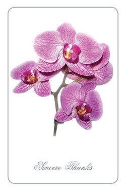 RT23 - Orchid