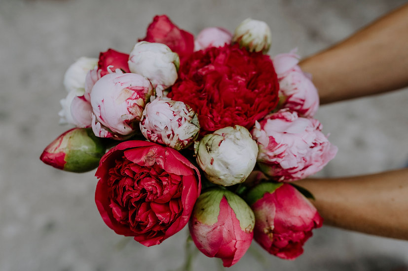 Special offers: June's best in bloom