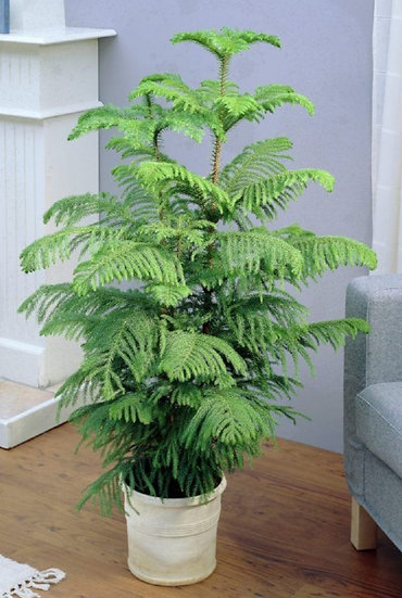 Sustainable Christmas tree -110 to 120 cm