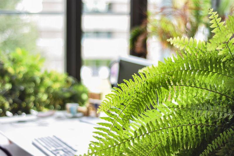 Office oasis.jpg