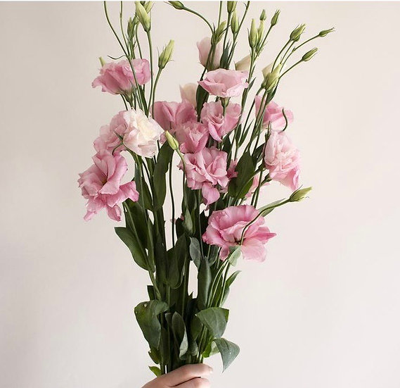Flower of the month: Lisianthus/eustomia