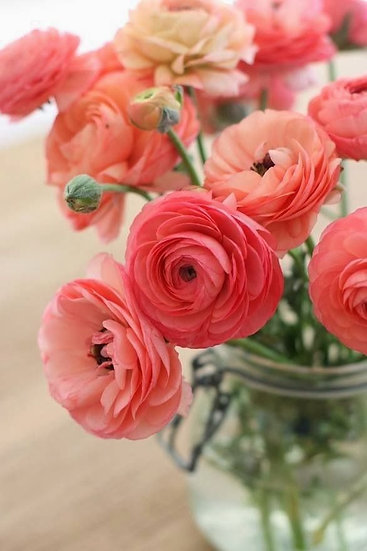 Flower of the month: Ranunculus