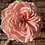 Thumbnail: Flower of the month: Roses