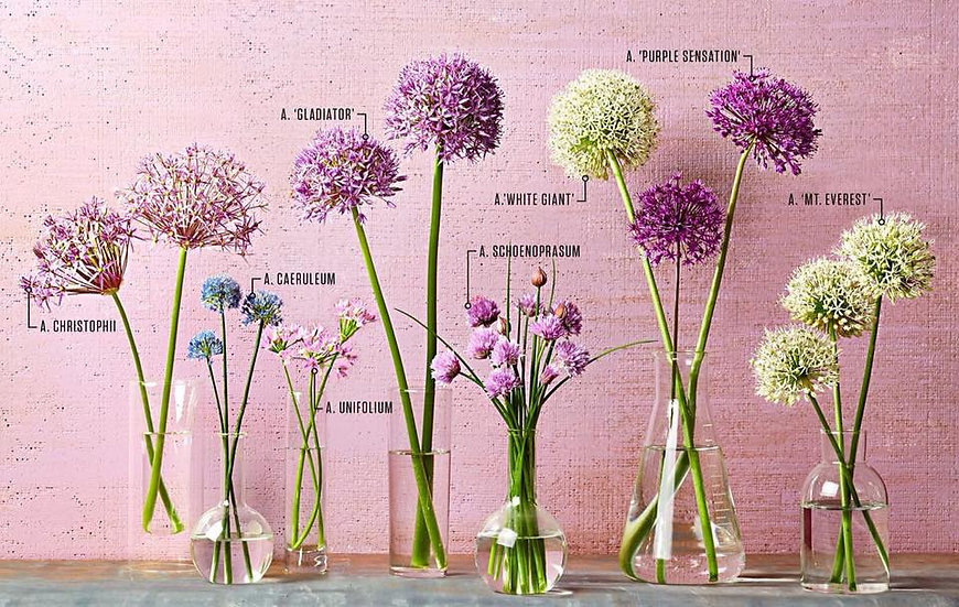 Bouquet of the week - All about allium