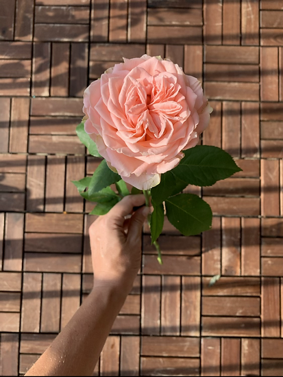 Flower of the month: Roses