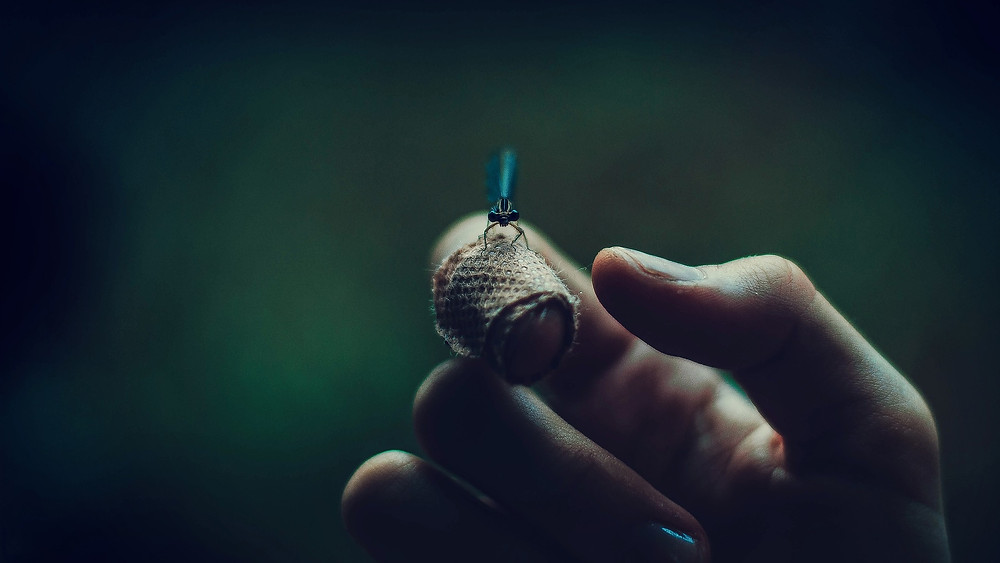 גחלילית על אצבע