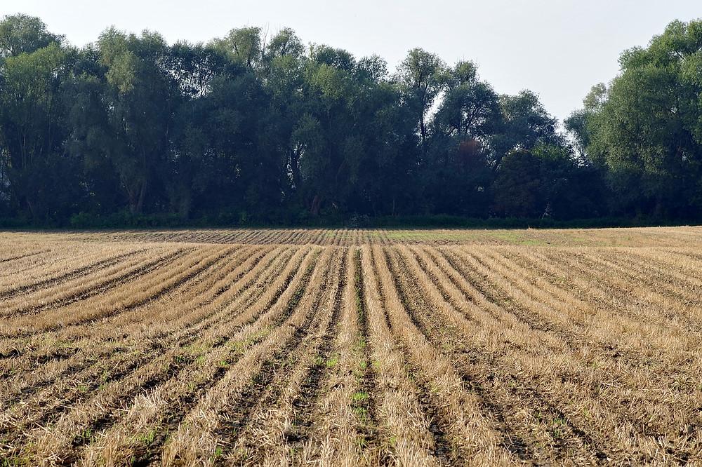 שדה לפני זריעה