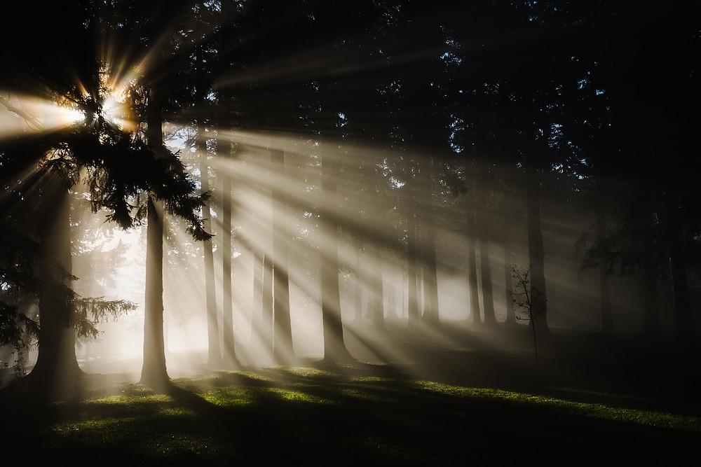 יער חשוך