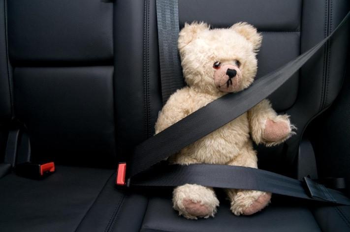 דובי חגור במכונית