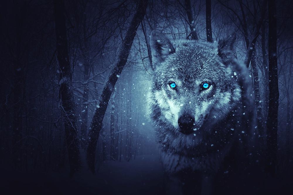 פנים של זאב על רקע יער