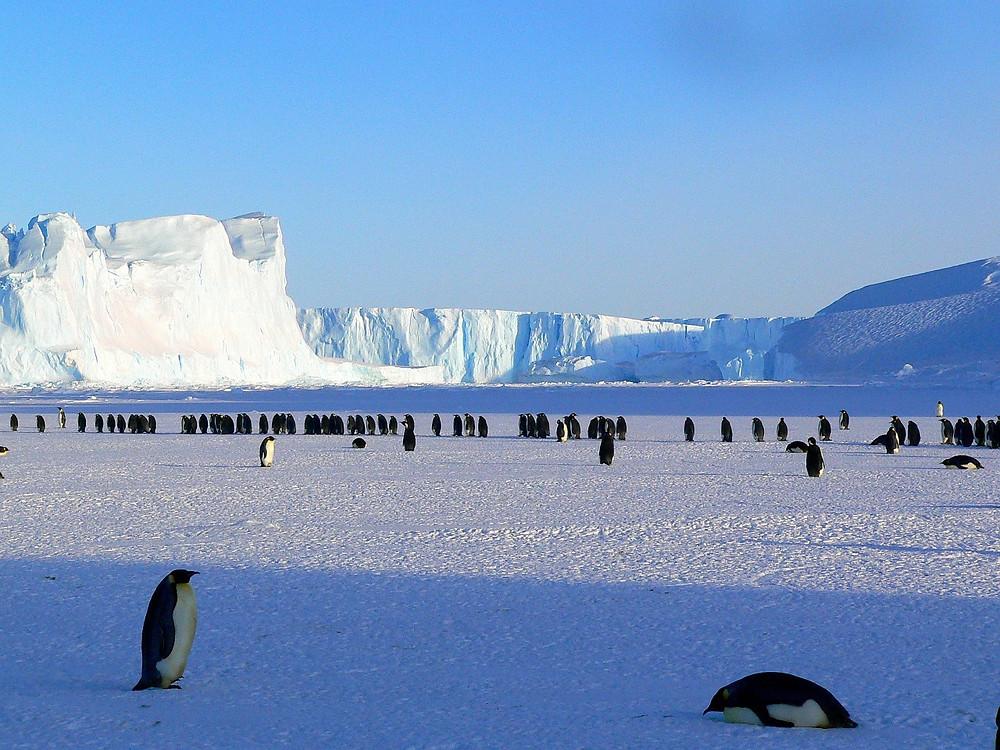 פינגווינים באנטארטיקה