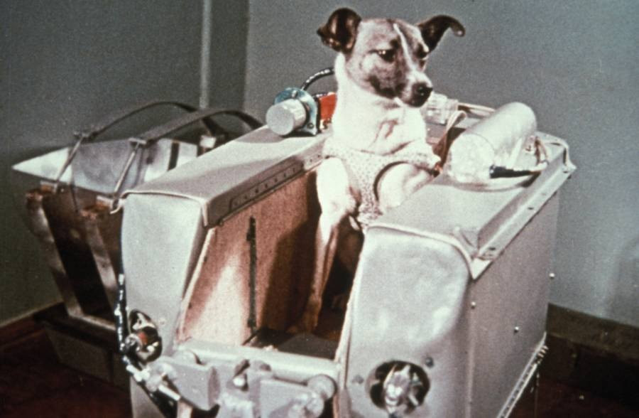 כלבה בחללית