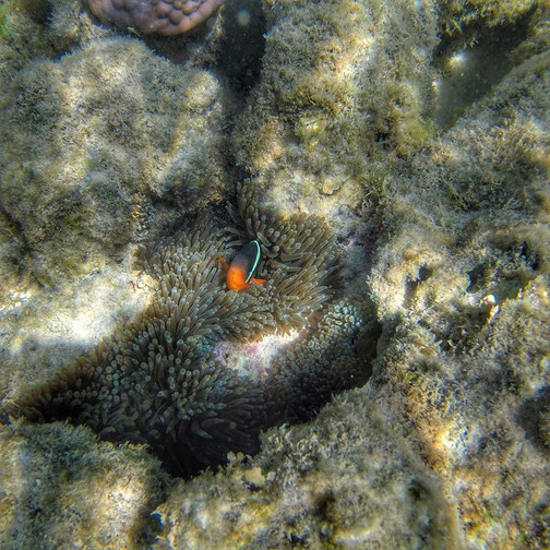 Fish & Coral - Ningaloo Reef