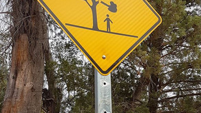 DANGER: POTENTIAL FALLING BRANCHES