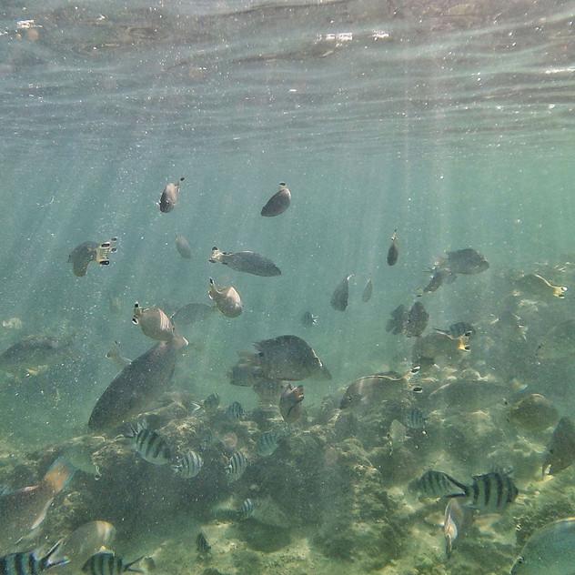The Aquarium, Point Quobba, WA