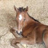 horse bedding.jpg