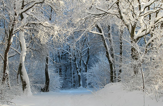 Vinter-skog-magic.jpg