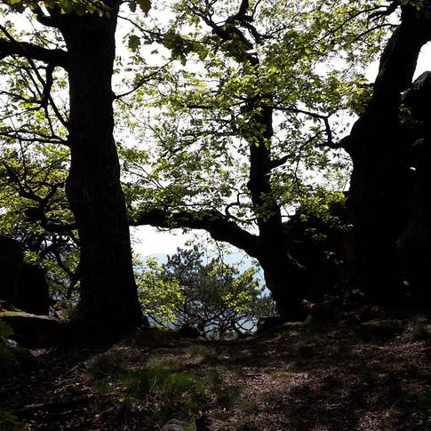 Josef_Natur1.jpg