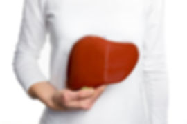 Female person holding red human liver mo