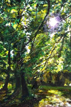 Light Through Trees 1