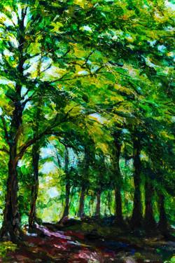 Light Through Trees 2
