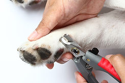 Clipping a dog's claws concept,.jpg