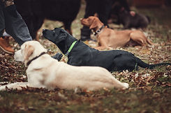 Group of dogs at the obedience training